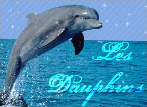 Dauphin - Images dauphins a imprimer ...